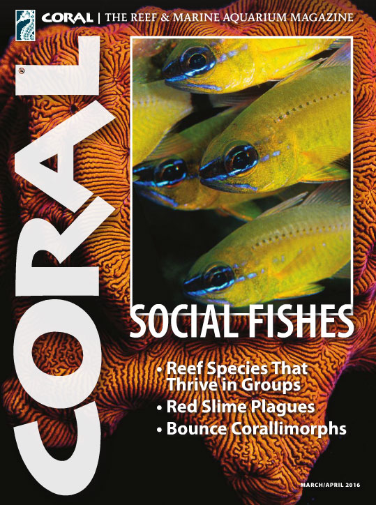 CORAL Magazine, March/April 2016 issue - Click cover to order this back issue for your CORAL collection.