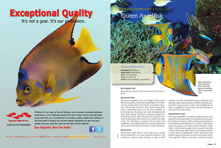 Daniel Knop looks at the iconic Queen Angelfish in this issue's Species Spotlight.
