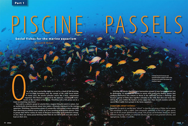 "In Part 1 of ""Piscine Passels"", Scott Michael shares the Chromis, Flagtails, Fusiliers, Cardinalfishes and Dartfishes that form groups in home aquariums. More to come in Part 2!"