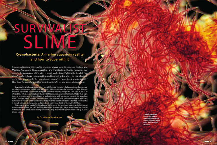 "Dr. Deiter Brockmann prepares you to battle red slime in ""Survivalist Slime - Cyanobacteria: A marine aquarium reality and how to cope with it"""