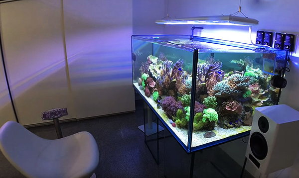 The office reef aquarium of CORAL International Editor Daniel Knop is now 21 months old.