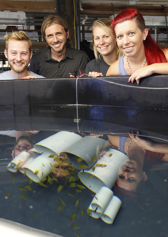 The OI Yellow Tang Project crew, left to right: Dean Kline, Chad Callan, Emma Forbes, and Erin Pereira-Davison.