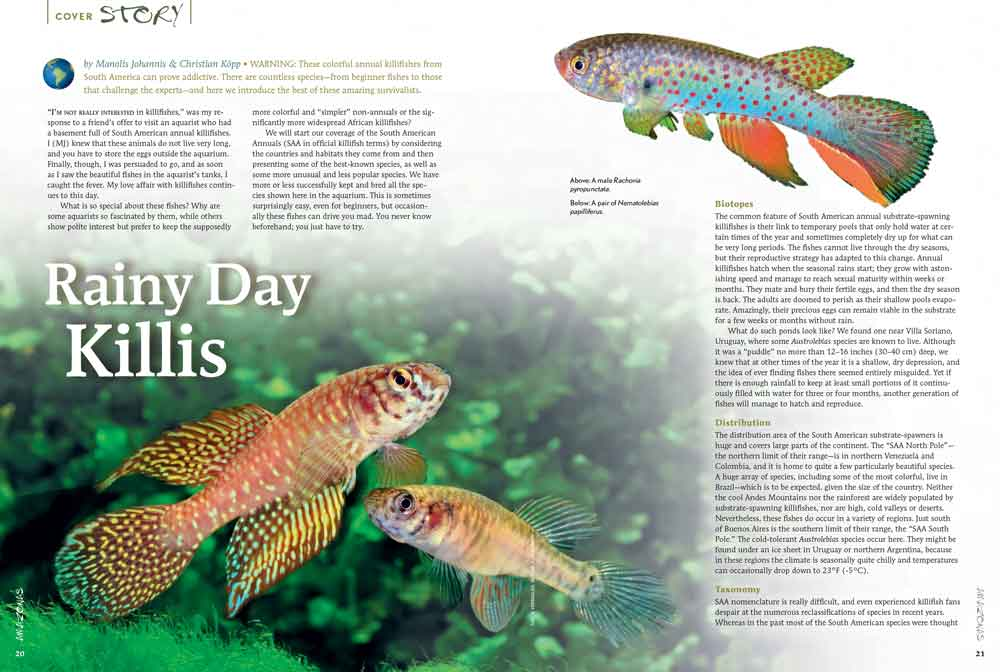 """Rainy Day Killis"" by Manolis Johannis and Christian Köpp kicks off our cover feature, introducing the South American Annual (SAA) Killifishes."