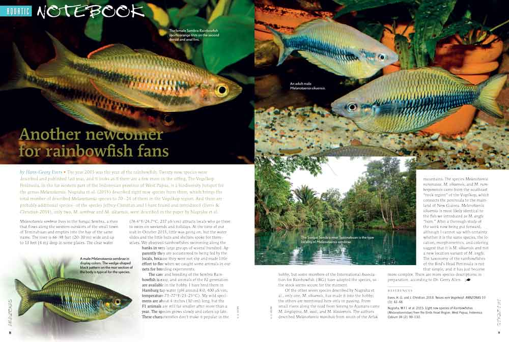 Our Aquatic Notebook starts off with the introduction of the Sembra River Rainbowfish, Melanotaenia sembrae. We also introduce a White strain Hypancistrus sp. L236, and the description of a new Severum species, Heros liberifer.