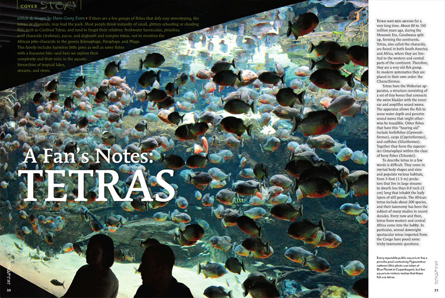 """Hans-Georg Evers writes, """"If there are few groups of fishes that defy easy stereotyping, the tetras may lead the pack...this family includes harmless little gems as well as some fishes with a fearsome bite—and here we explore their complexity..."""""""