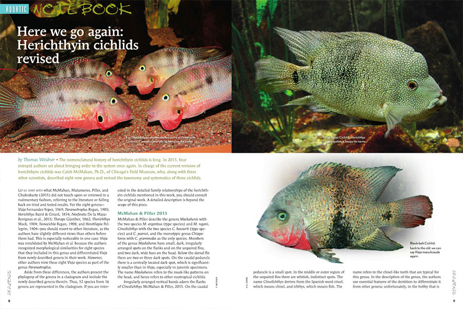 Thomas Weidner provides an introduction to the latest, 2015 revision of herichthyin cichlids to kick off the Aquatic Notebook department in the current issue.
