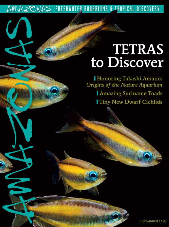 It's in the mail: cover of AMAZONAS Magazine, Volume 5, Number 4. On the cover: Lamp Eye Congo Tetras, Phenacogrammus aurantiacus, image by Hans-Georg Evers