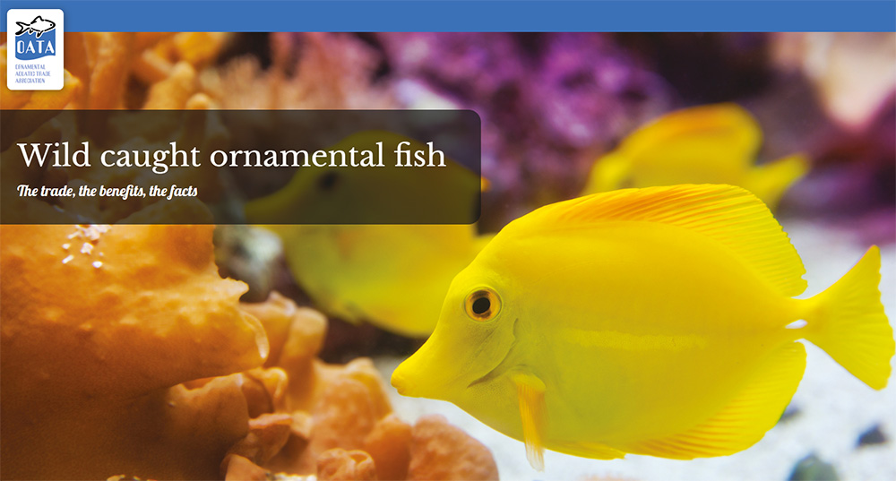 Wild caught ornamental fish: The trade, the benefits, the facts - a new report from OATA