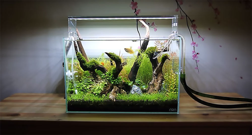 A snapshot of Ray Motoyama's ever-evolving Planted Aquarium; an ADA Mini L, 32 liter tank light by an ADA Aquasky 451. It's filtered with an Eheim 2213, and receives CO2 and is fertilized with the EI (Estimative index) dosing method.