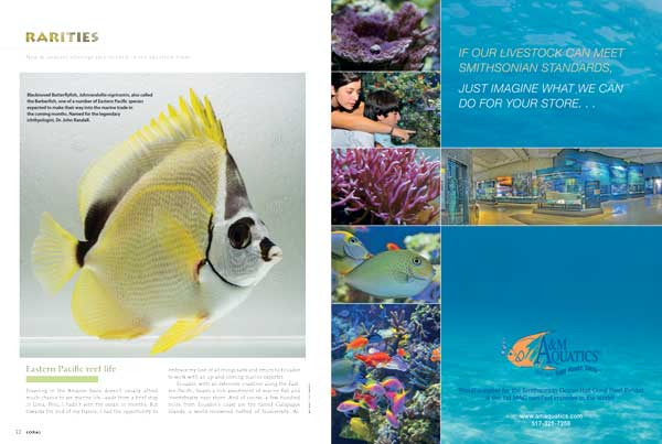 "East Pacific fishes such as this Blacknosed Butterflyfish, Johnrandallia nigrirostris, lead off this issue's ""Rarities,"" which also features hardy Spotted Seastars and Red Banded Lobsters, just to highlight a few."