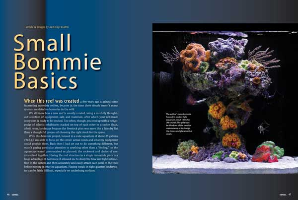 Johnny Ciotti explains the thought process behind his classic nano-bommie aquarium and provides stocking insights in Small Bommie Basics.