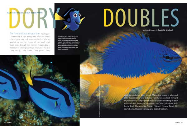"Reef fishes expert Scott W. Michael revisits the blue & yellow damselfish species in the genus Chrysiptera in search of the perfect Dory Double; electric-blue ""Dory"" alternatives suitable for beginners or the smaller saltwater fish tank."