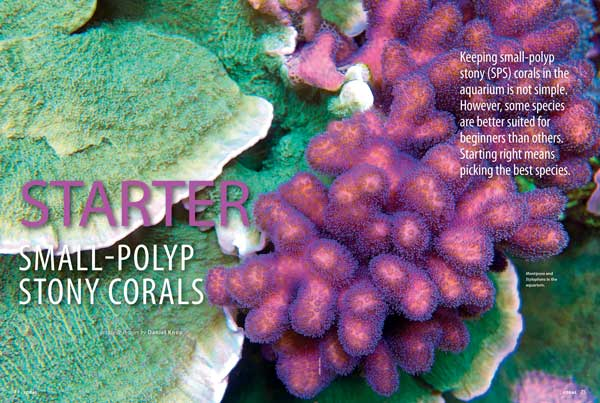 """Most coral reef aquarists dream of keeping fast-growing stony corals that form various shapes and boast attractive colors."" Daniel Knop notes, ""However, some species are better suited for beginners than others. Starting right means picking the best species."" Learn more inside the newest issue of CORAL."