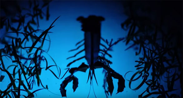 Animated shadow puppet film on the sensory lives of Lobsters? Pretty darn cool if you ask us!
