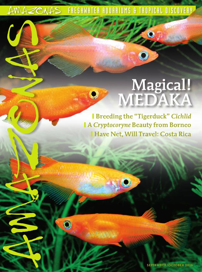 It's in the mail: cover of AMAZONAS Magazine, Volume 5, Number 5. On the cover: Lamp Eye Congo Tetras, New cultivated forms of Japanese Ricefish, Oryzias latipes, images by Fumitoshi Mori.