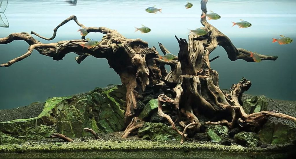 """Dead Tree"" - just another phase of an aquarium's life cycle!"