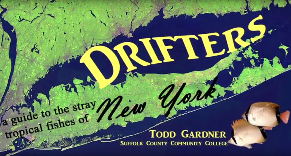 "Todd Gardner's ""Drifters: a guide to the stray tropical fishes of New York""."