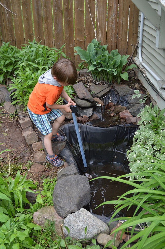 My son Ethan helping empty out the pond; I later discovered that the liner of the waterfall in the background stopped short of the pond, effectively diverting pond water into the ground. And this year, also found out it's riddled with holes! It'll be a while before I show off the restoration of my neighbor's mosquito farm.