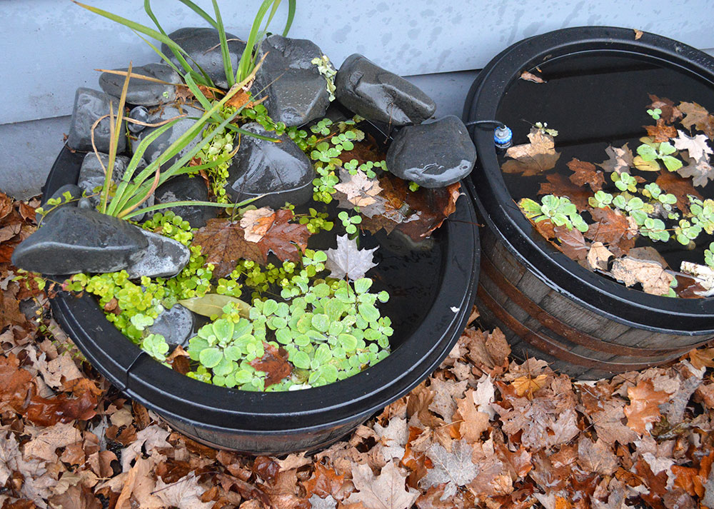 Leaves. Yes, they're a real problem for your container pond in the fall!