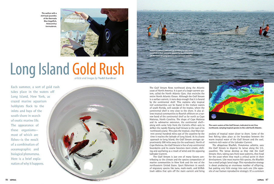 The opening pages of Long Island Gold Rush, by Todd Gardner, from the May/June 2012 issue of CORAL Magazine.