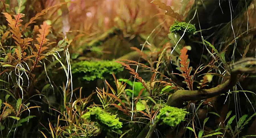 Still taken from the film October Twilight by Norbert Sabat, featuring the aquascaping of Piotr Dymowski