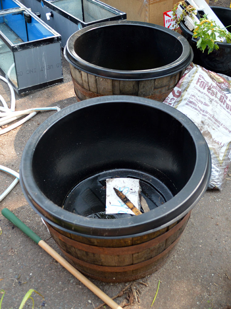 Full-depth liners and their whiskey barrels, the foundation for my container ponds.