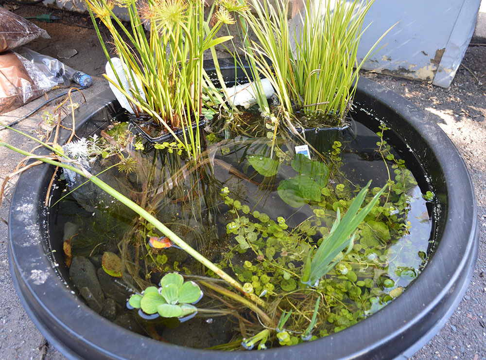 The shallow pond as it sat in late summer (9-13-15).