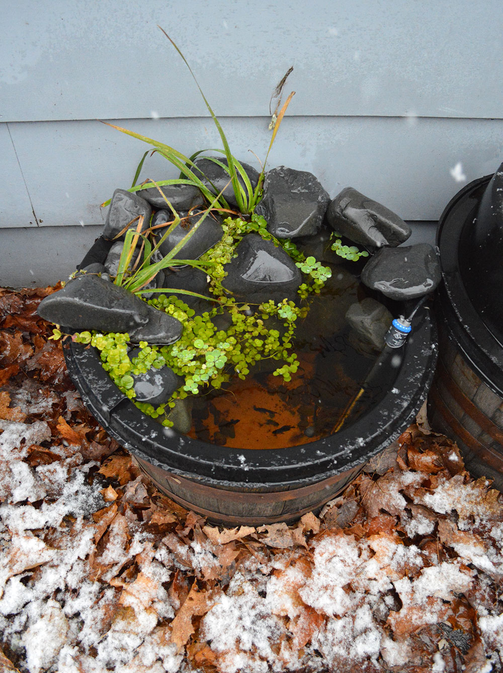 My last container pond is about to get snowed-in, unless I break it down!