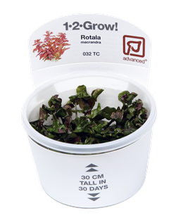 Tropica's 1-2-Grow! line of tissue cultured aquarium plants, here showing Rotala macrandra as an example. Image credit: Tropica