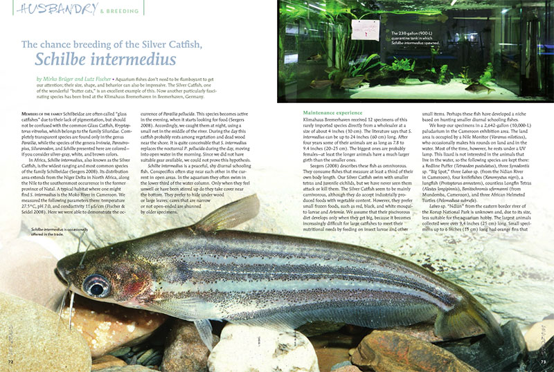 "Mikro Brüger and Lutz Fisher report on ""The chance breeding of the Silver Catfish, Schilbe intermedius"", at the Klimahause Bremerhaven in Bremerhaven, Germany."