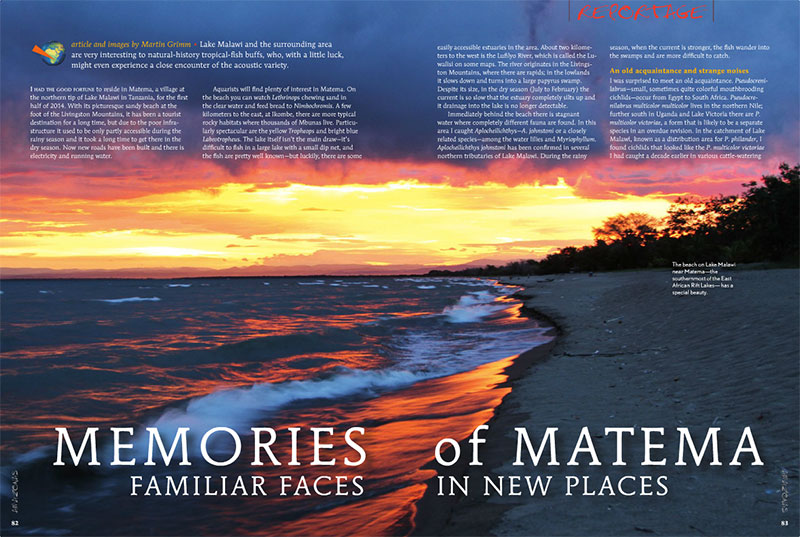"""Lake Malawi and the surrounding area are very interesting to natural-history tropical-fish buffs, who, with a little luck, might even experience a close encounter of the acoustic variety."" Find out what Martin Grimm is hinting at when you read ""Memories of Matema""."