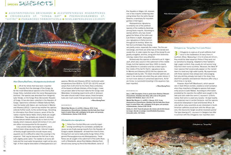 "This issue's ""Species Snapshots"" examines a new Cherry Red Tetra (Alestopetersius brichardi), the related Alestopetersius nigropterus, an African catfish that can be found in Lake Malawi going by the name Chiloglanis sp. ""Senga Bay"", a beautiful African tetra called Phenocogrammus sp. ""Lefini"", the Paragua Torrent Tetra (Piabarchus torrenticola), and a Tanganyikan cichlid from Congo that's similar to the commonly seen Neolamprologus caudopunctatus—Neolamprologus leloupi."
