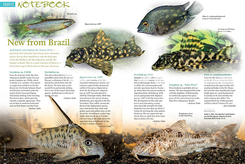 Aquatic Notebook starts off with Stephan M. Tanner's look at new fish imports from Brazil. Also included in this issue are Zebra Corys, Blue-Headed Corys, a look at a large Malawi Cichlid aquarium at a Hamburg school, and a new Neon Goby from the Philippines.