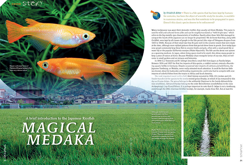 "Friedrich Bitter offers a brief introduction to the Japanese Ricefish in ""Magical Medaka"", our cover feature this issue."