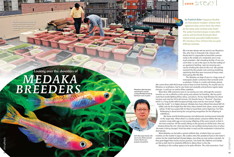 Join Friedrich Bitter as he travels to Japan to visit several successful hobbyist breeders who specialize in Medaka.