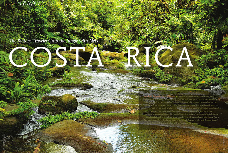 Follow Steve Waldron as he heads into the jungle with nets! Biotpe: Costa Rica