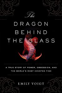 The Dragon Behind The Glass, by Emily Voigt.