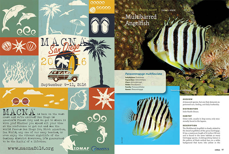 "Paracentropyge multifasciata, a challenging Dwarf Angelfish species, takes the ""Species Spotlight"" this issue, with insights from Daniel Knop."
