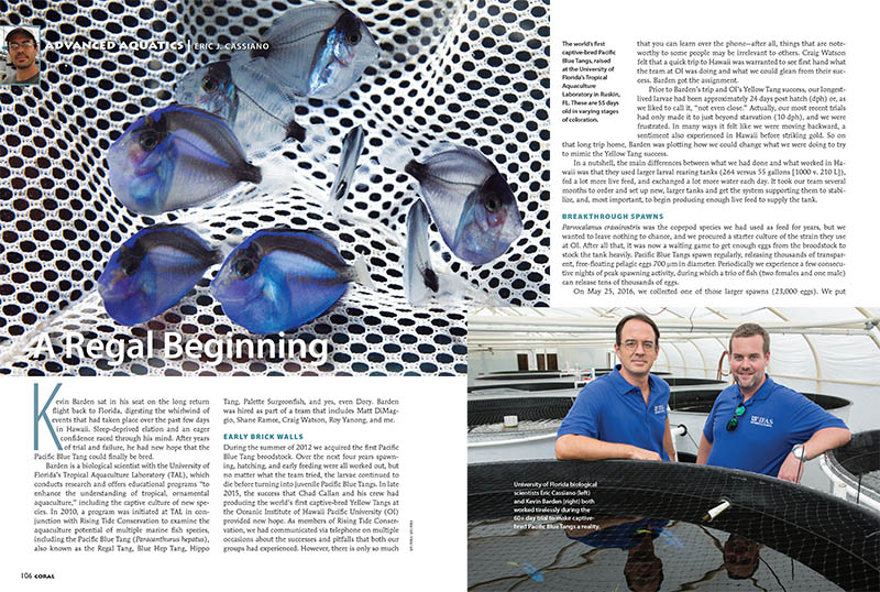 "Eric Cassiano, a biological scientist at the University of Florida's Tropical Aquaculture Laboratory, provides exclusive new details of the year's most record-breaking story, the first successful captive breeding of the Pacific Blue Tang, Paracanthurus hepatus. Learn more by reading ""A Regal Beginning."""