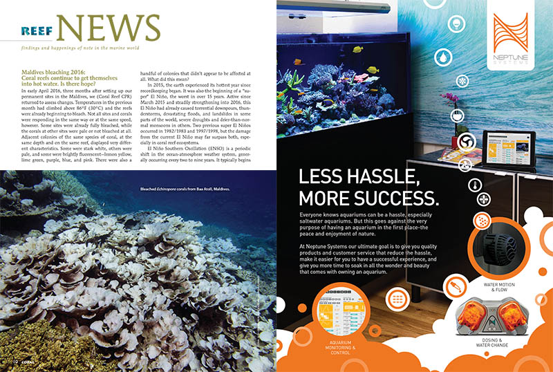 Maldives Bleaching 2016: Coral reefs continue to get themselves into hot water. Is there hope? Find the answers in this issue's Reef News section.
