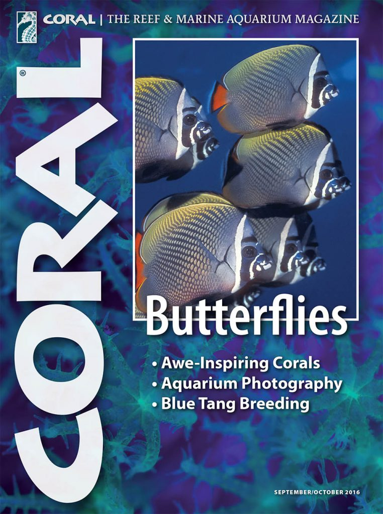 The cover of CORAL Magazine Volume 13, Issue 5 - Butterflies - September/October 2016