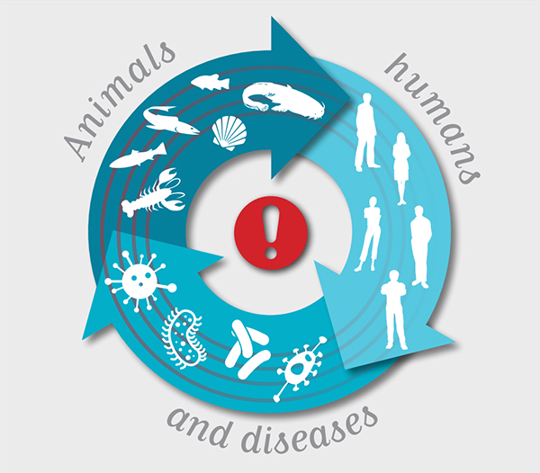 Animals, humans and diseases. OIE, 2015.