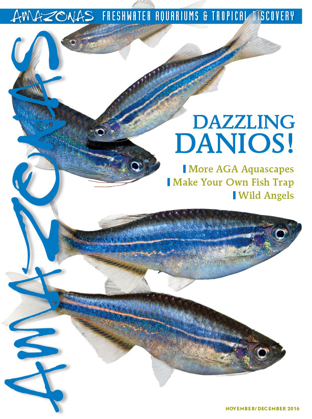 "It's in the mail: cover of AMAZONAS Magazine, Volume 5, Number 6. On the cover: Danio sp. ""Hikari."" Images by Hans-Georg Evers."