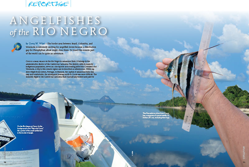 """The border area between Brazil, Colombia, and Venezuela is extremely exciting for angelfish lovers because a distribution gap for Pterophyllum altum might close there,"" states author Georg W. Wüst. ""To travel this remote part of the world can be quite an adventure."" Go there when you read ""Angelfishes of the Rio Negro."""
