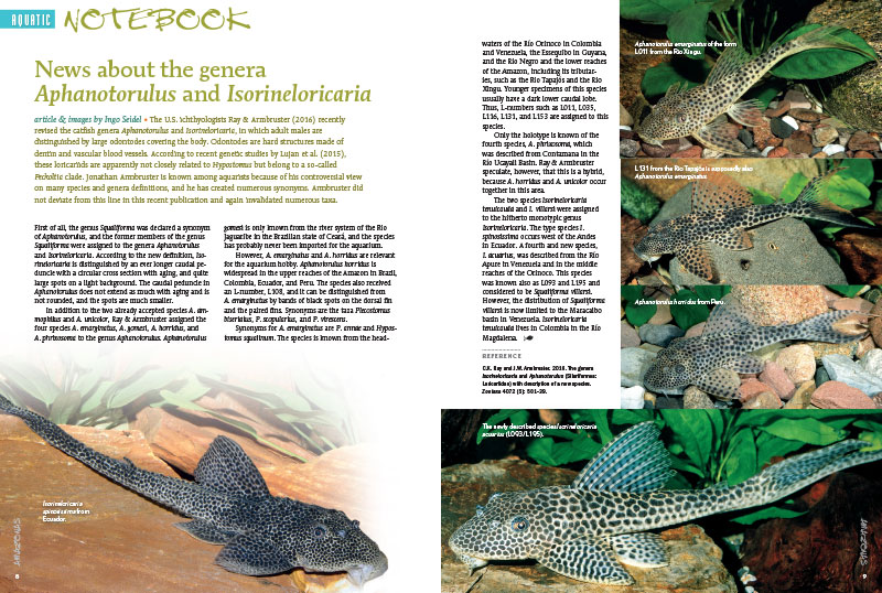 "Ingo Seidel kicks off our Aquatic Notebook with ""News about the genera Aphanotorulus and Isorineloricaria."" Also in the notebook, two new Hypancistrus species, new rainbowfishes, and Corydoras eversi."