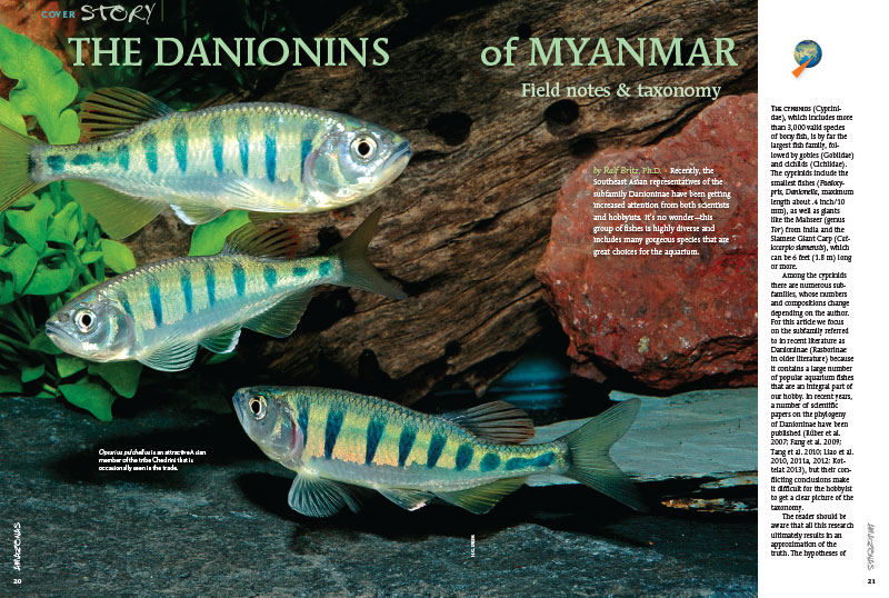 "Ralf Britz, Ph.D., introduces us to ""The Danionins of Myanmar."""