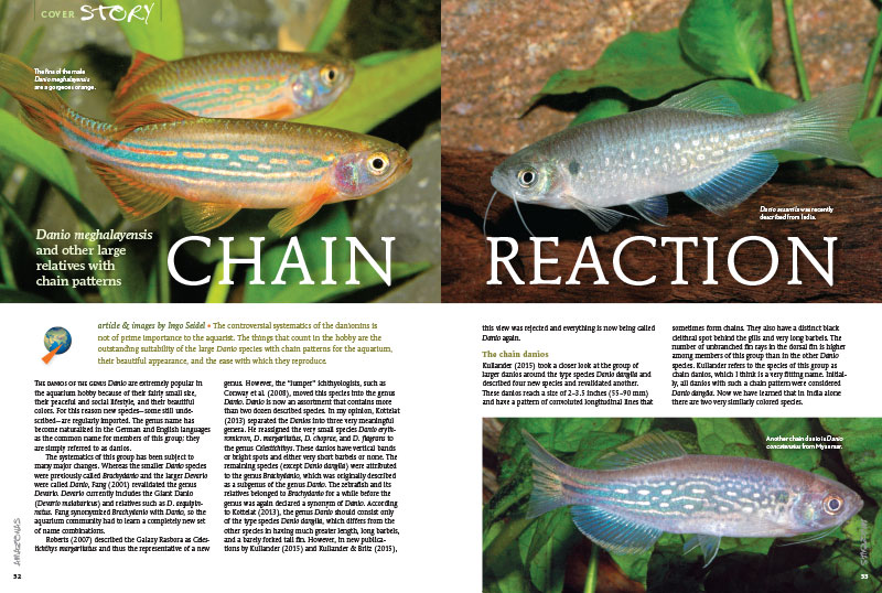 "Investigate Danio meghalayensis and other large relatives with chain patterns in ""Chain Reaction"" by Ingo Seidel."