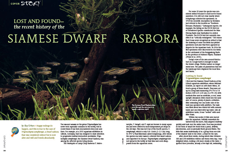 """Happy endings do happen, and this is true in the case of Trigonostigma somphongsi, a dwarf rasbora that was considered extinct but is now alive and well and breeds abundantly."" Learn more about the Siamese Dwarf Rasbora in this article by Kay Urban."