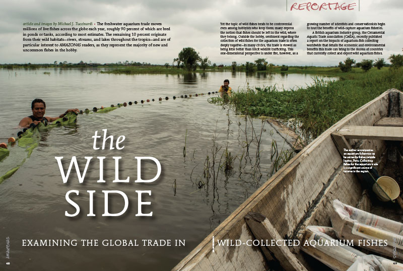 """The Wild Side,"" by Michael J. Tuccinardi, examines the global trade in wild-collected aquarium fishes."
