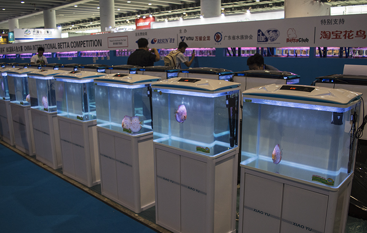 Row of tanks holding competition Discus